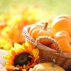 Fall Favorite SuperFood – The Mighty Pumpkin