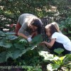 An Organic Gardening Experience Like No Other