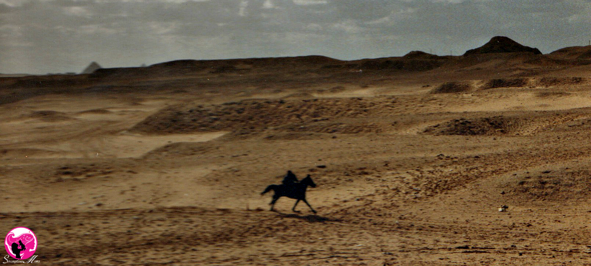 Galloping in Egypt desert